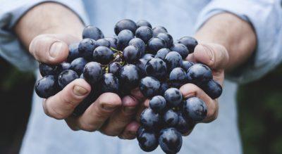 JOLLY - grapes-jolly.jpg