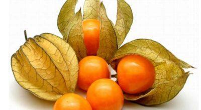 La-Straniera - straniera-fruta.jpg